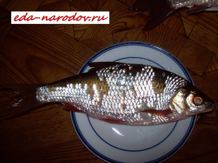 Рыба - сорога