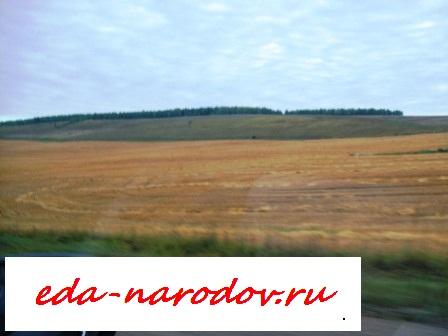 Поле -засеянное пшеницей